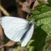 First butterfly.....