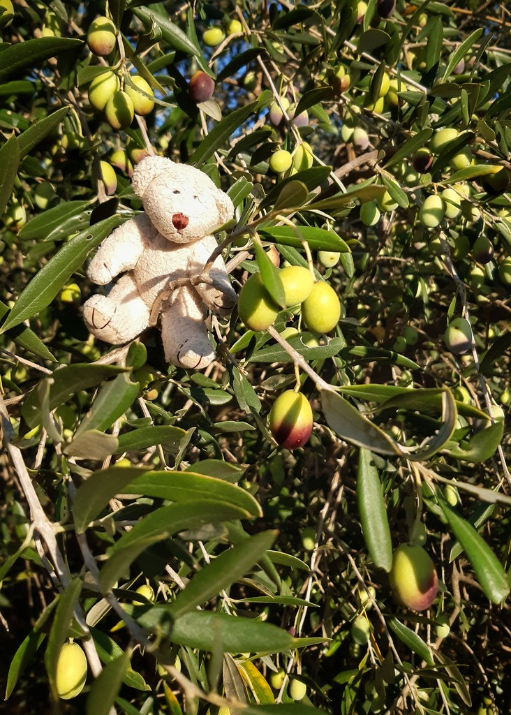 Inspecting the Olives by salza