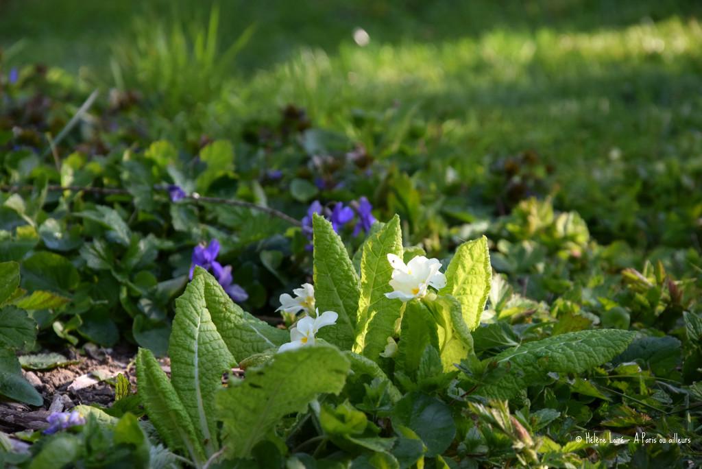 Spring little flowers  by parisouailleurs