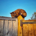 Cat on a hot fence