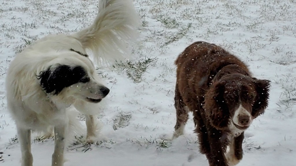 Snow Dogs by wyomingsis