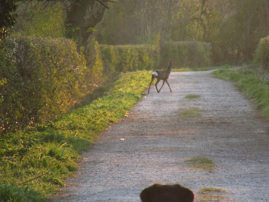And Sadie didn't chase the deer 😁 by lyndamcg