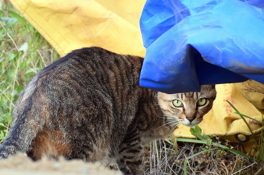 2021-04-20 Kitty Corner by cityhillsandsea