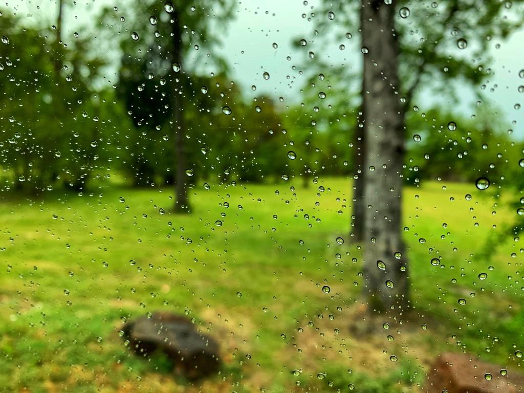 Rain! by louannwarren
