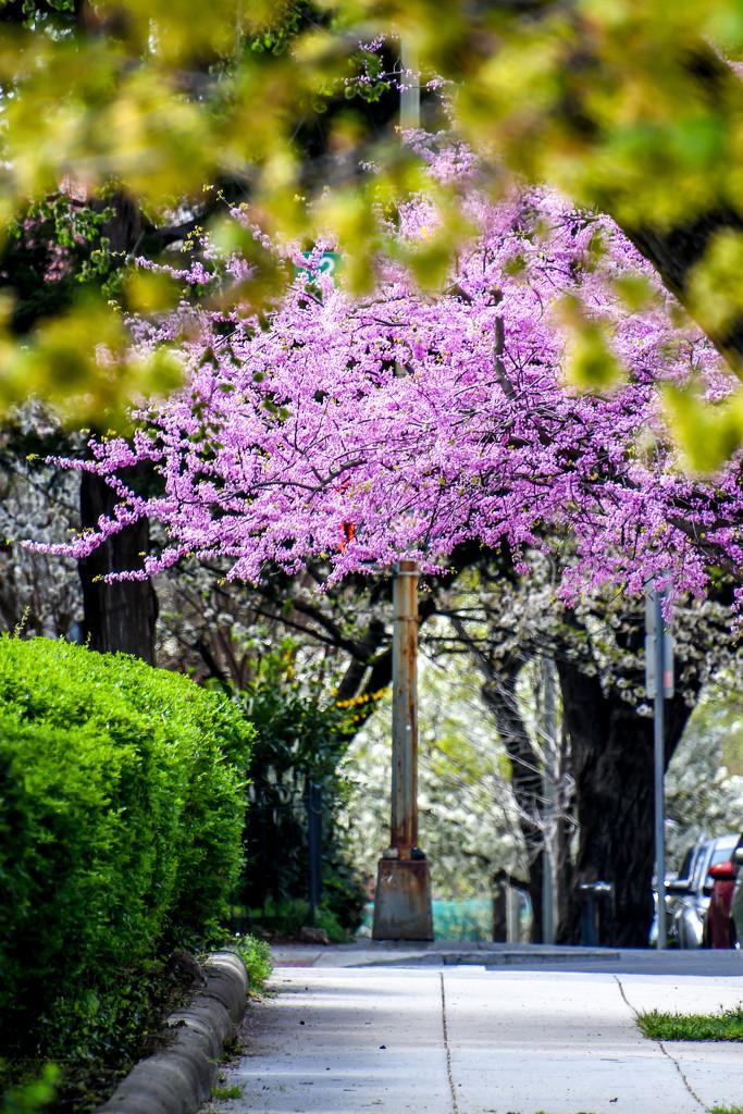 City Sidewalk by danette