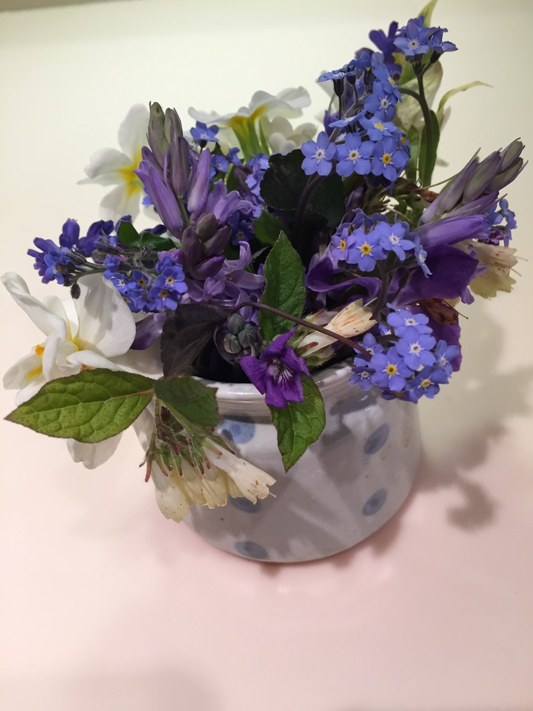 Spring flowers from the garden by snowy