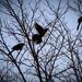 Bird in the Bush by jeffjones