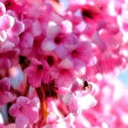21st Apr 2021 - Covering the Blossom