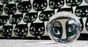 21st Apr 2021 - 21. Cats Eyes