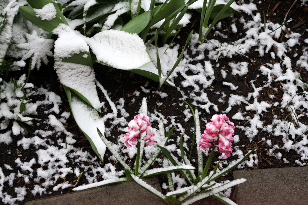 A little snow must fall by bruni