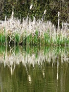 21st Apr 2021 - Reflections