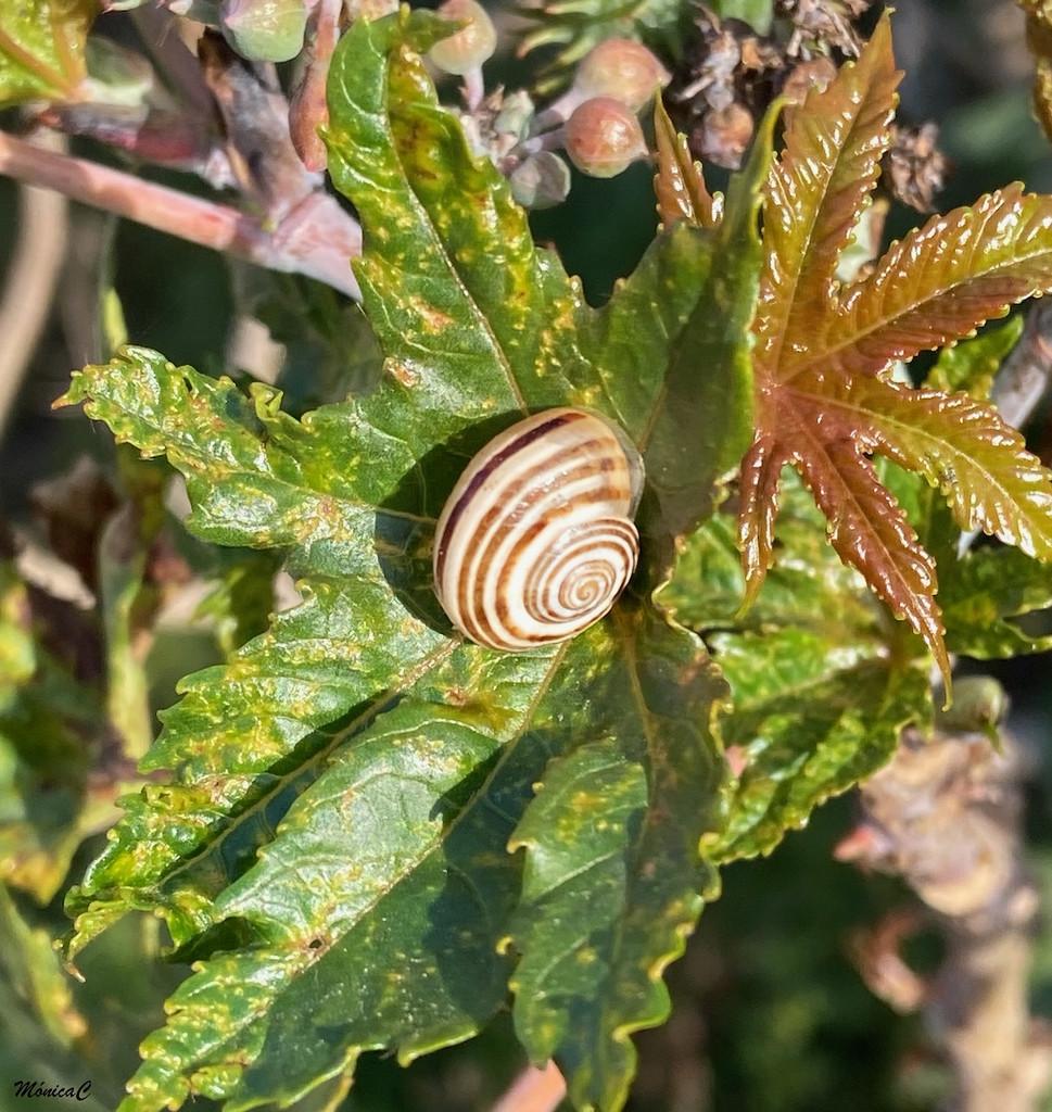 Snail by monicac