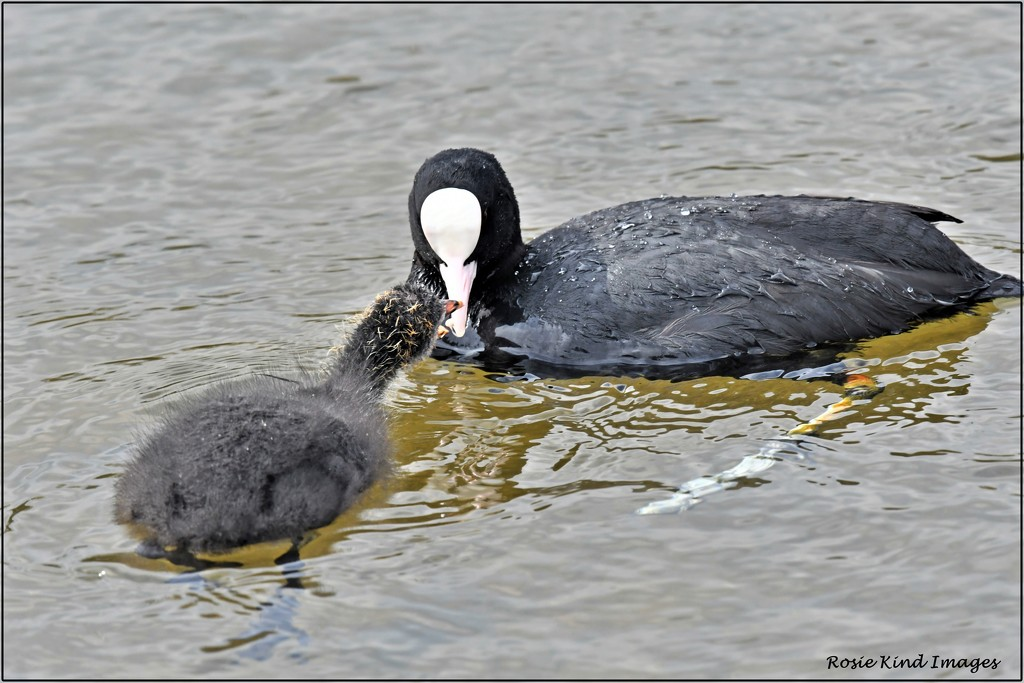 Mother and baby by rosiekind