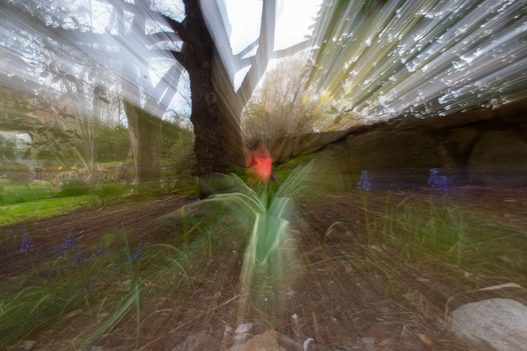 Secret Garden - Day 21 by tdaug80