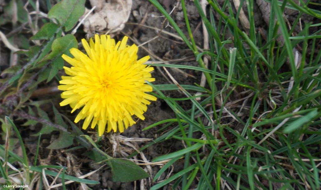 Yellow by larrysphotos