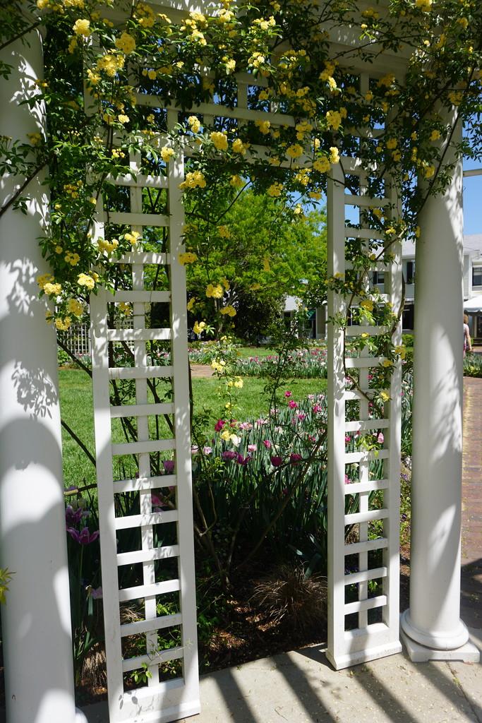 Garden Trellis by allie912