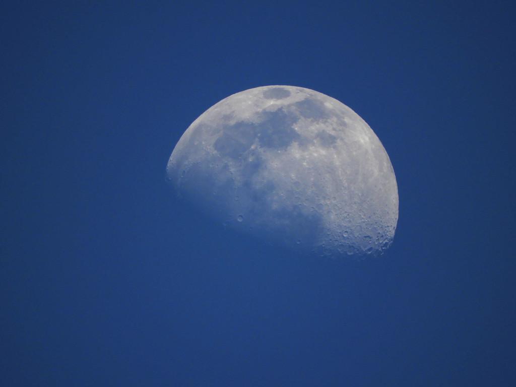 Blue Moon! by homeschoolmom