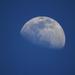 Blue Moon!