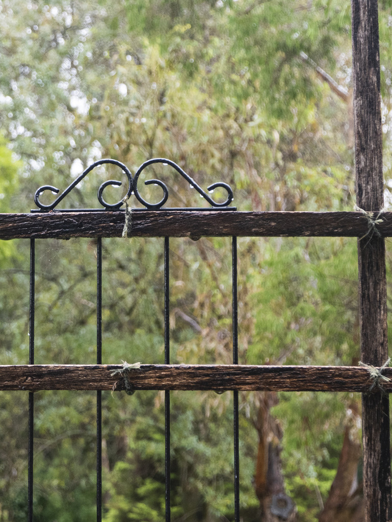 Trellis Crown in the Rain by ethelperry