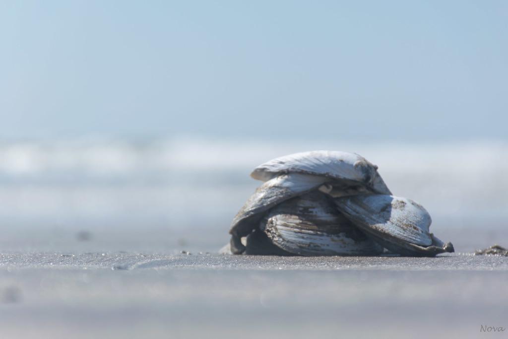Clam shells by novab