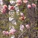 Magnolia in the Woods