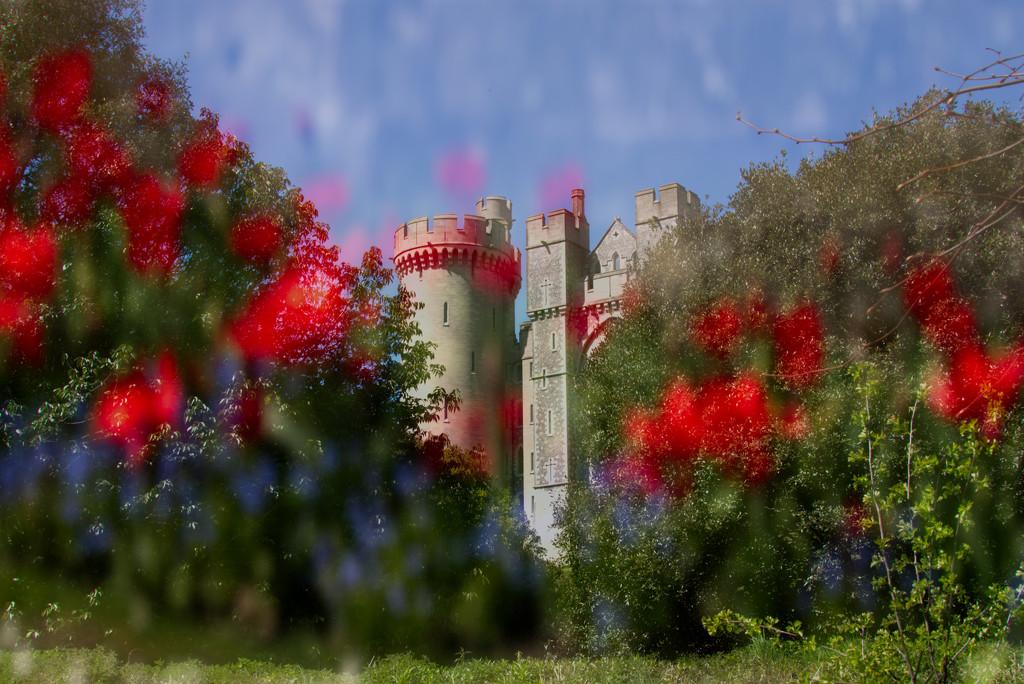 Arundel Castle's Poppies by 30pics4jackiesdiamond