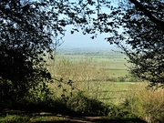 19th Apr 2021 - Through the trees and over the Levels