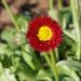 Joyfull flower