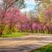 Red Haw Lake Road by dejongdd