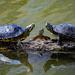 The Turtle Family by jyokota