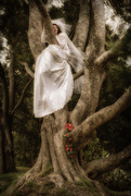 23rd Apr 2021 - Tree Angel
