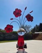 23rd Apr 2021 - 23. Poppies