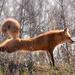 Downward Dog by radiogirl
