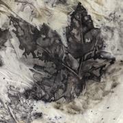 23rd Apr 2021 - Maple Leaf