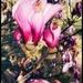 Adieu, Magnolias