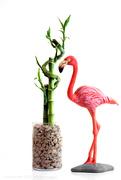23rd Apr 2021 - thank goodness it's flamingo friday!
