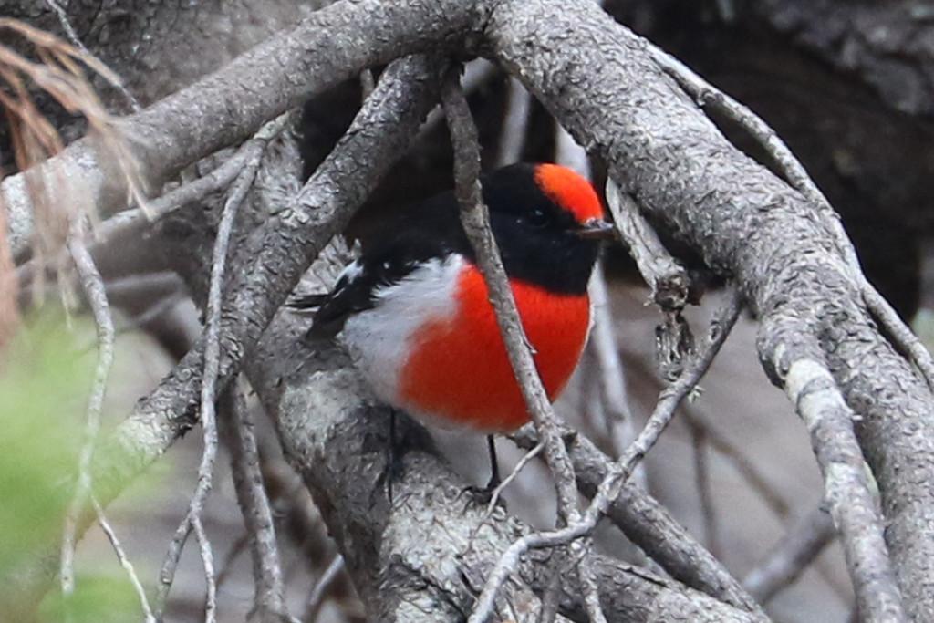 Hide and seek by flyrobin