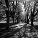 Avenue by rumpelstiltskin