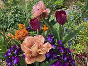 24th Apr 2021 - Pot in the garden