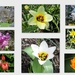 Spring at Edwards Garden in Toronto by bruni
