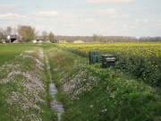 25th Apr 2021 - rapeseed and more