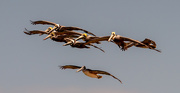24th Apr 2021 - The Pelicans Were Coming Down the Beach!