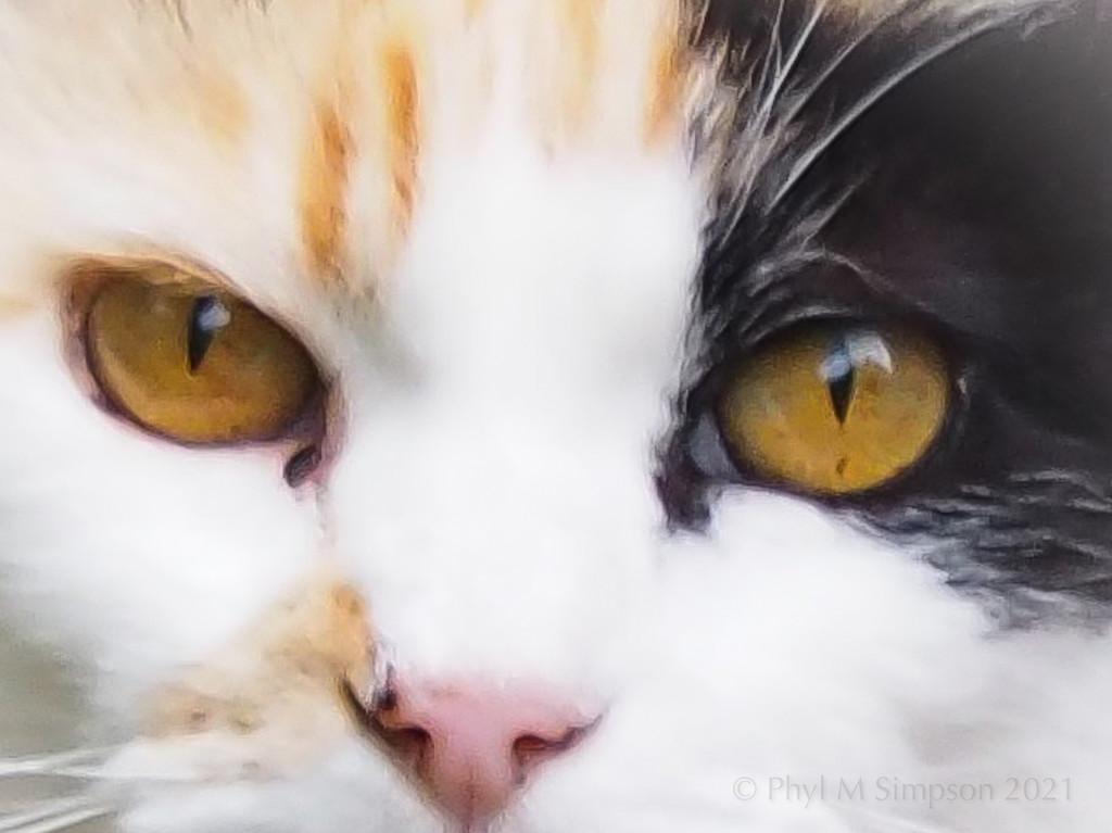 Eye Spy by elatedpixie