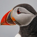 Puffin on 365 Project