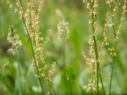 29th Apr 2021 - My 13th wildflower find of spring...