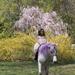 Unicorn 🦄/ pony 🐴?