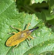 25th Apr 2021 - Bug