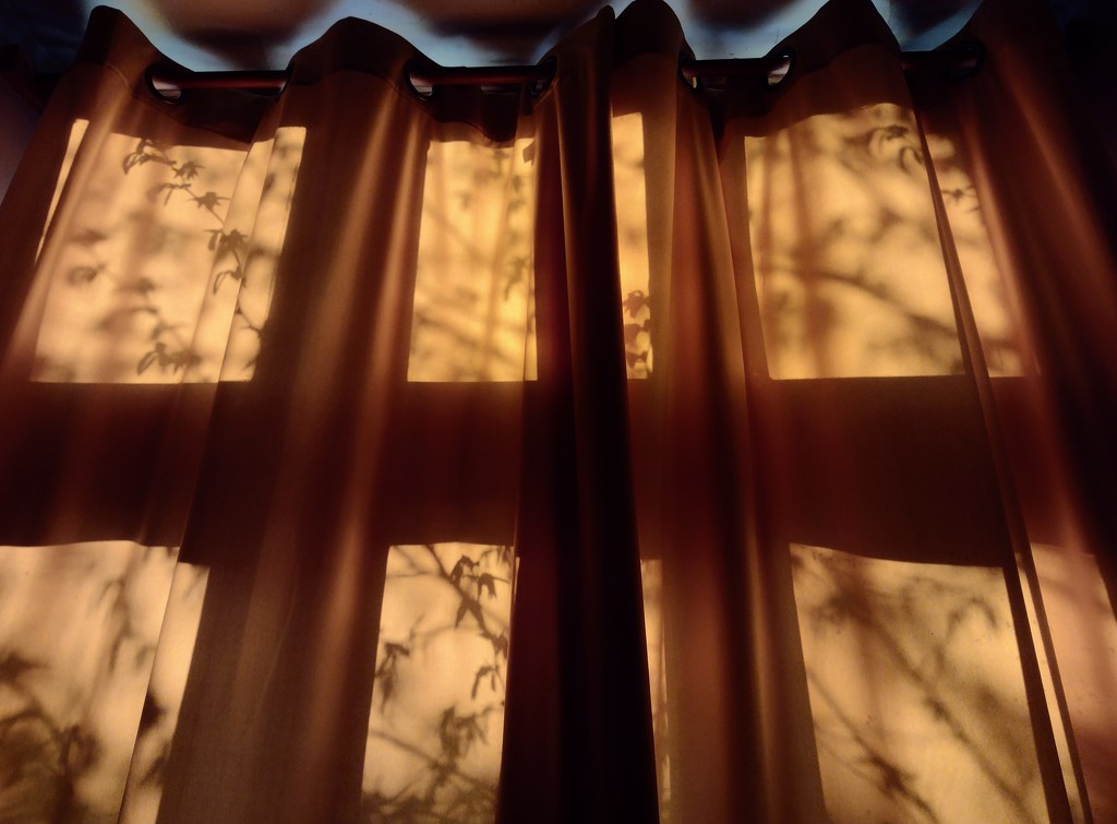 Shadows by toinette