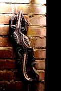 21st Apr 2021 - April 21st Aboriginal Alligator