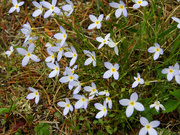 25th Apr 2021 - Tiny flower